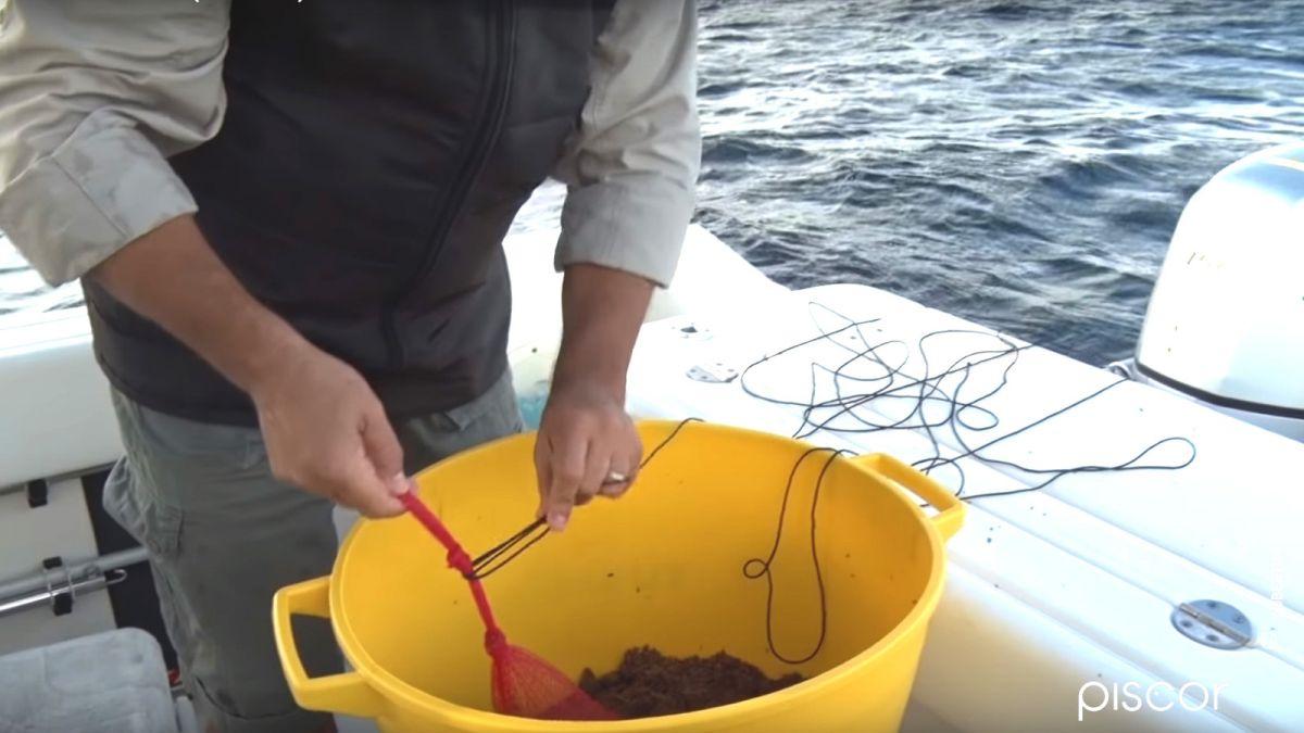 Amorce Mer Sardine 1