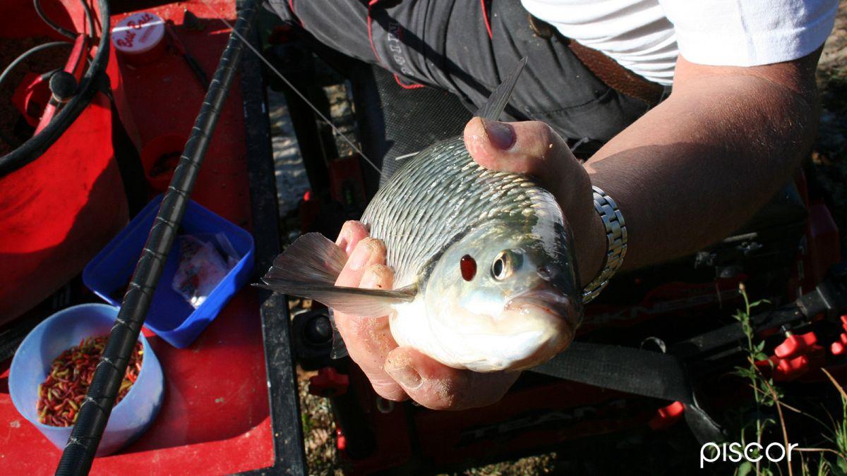 Bigattini Pesca 3