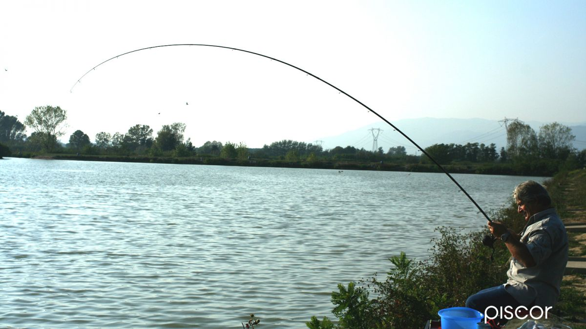 Canne Pesca Inglese 11