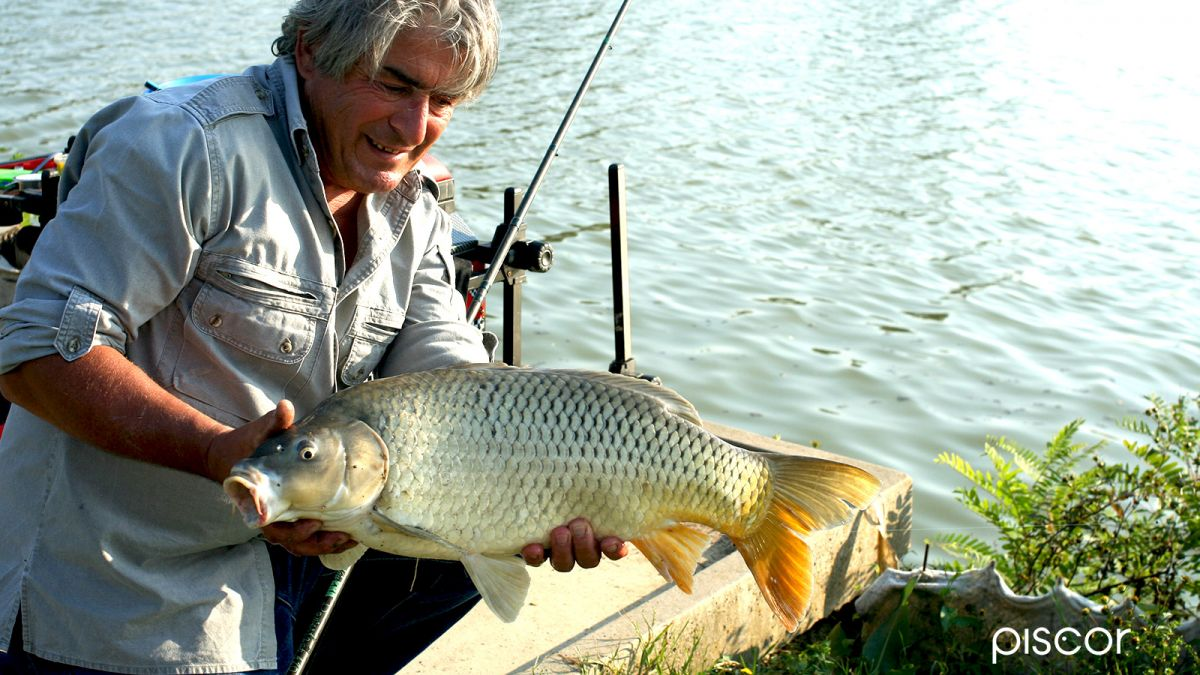 Canne Pesca Inglese 12