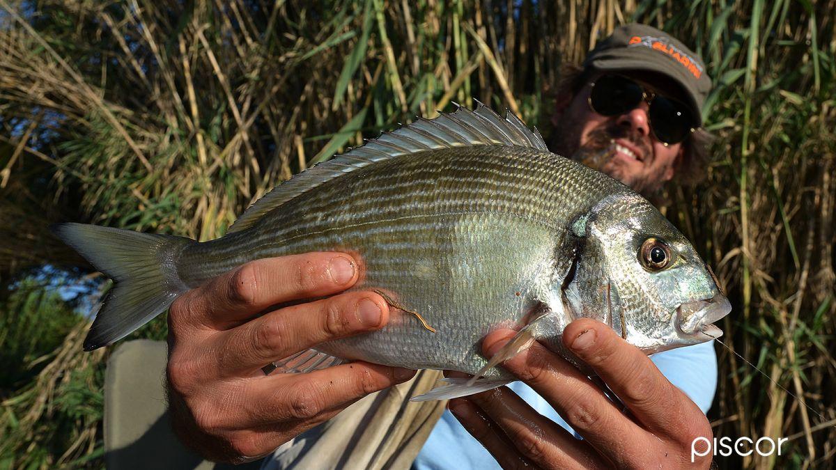 Come Pescare le Orate 2