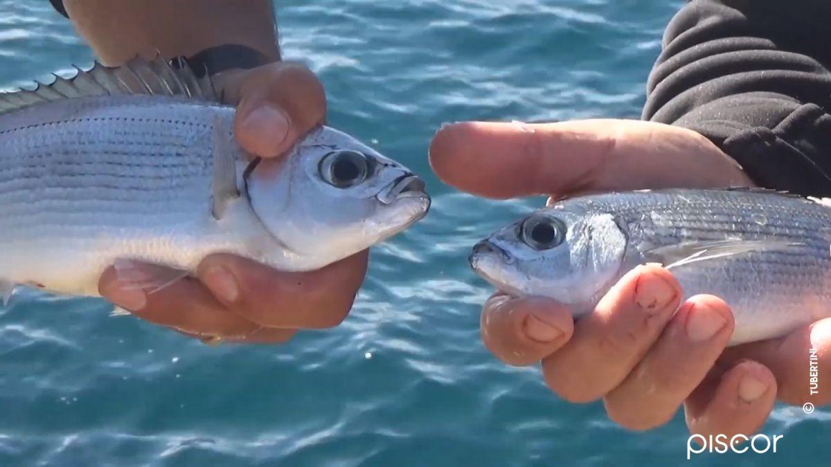 Pesca desde Arrecife en Floating Feeder, Surf y Boloñesa