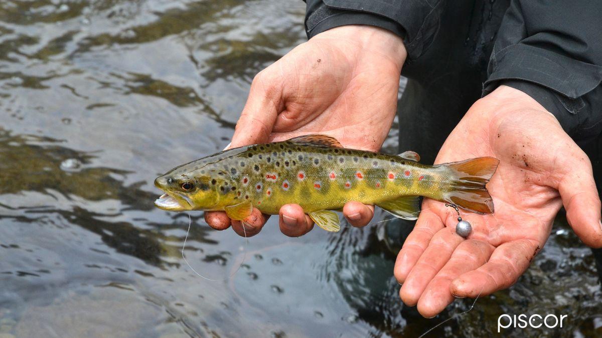 Montature per Pesca alla Trota in Torrente 4