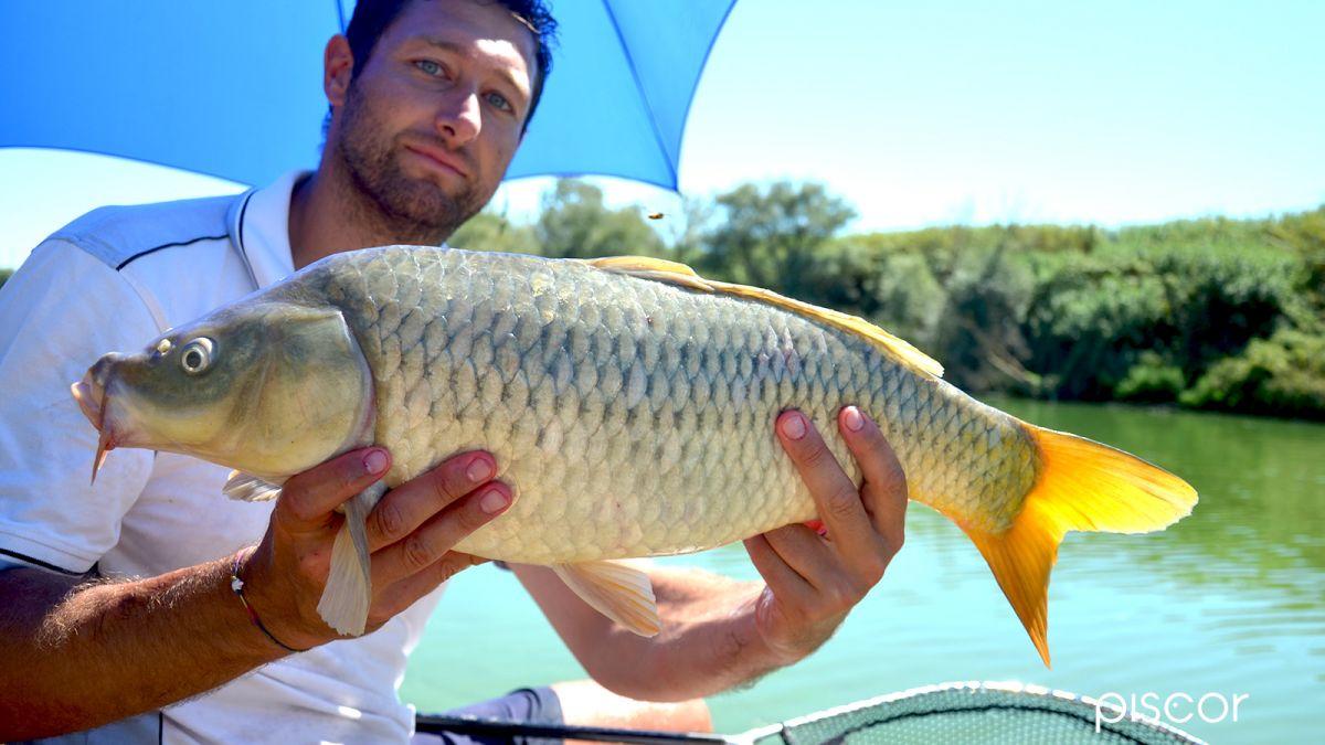 Pêche à la Barbue de Rivière 3