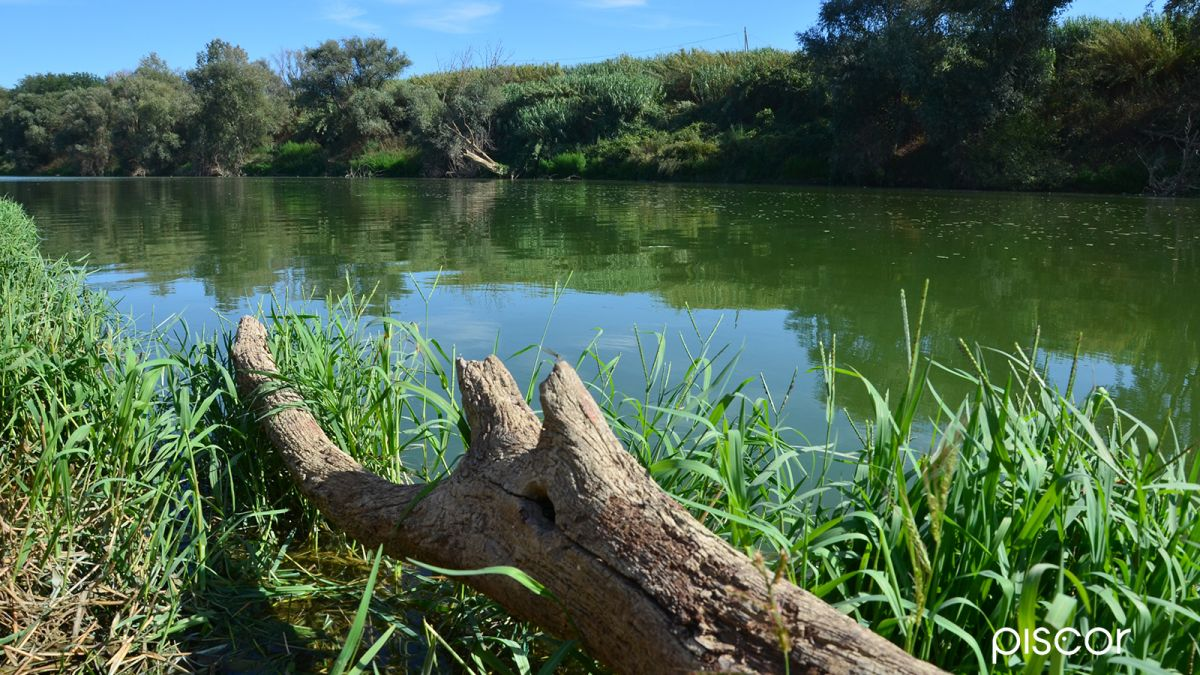 Pêche à la Barbue de Rivière 5