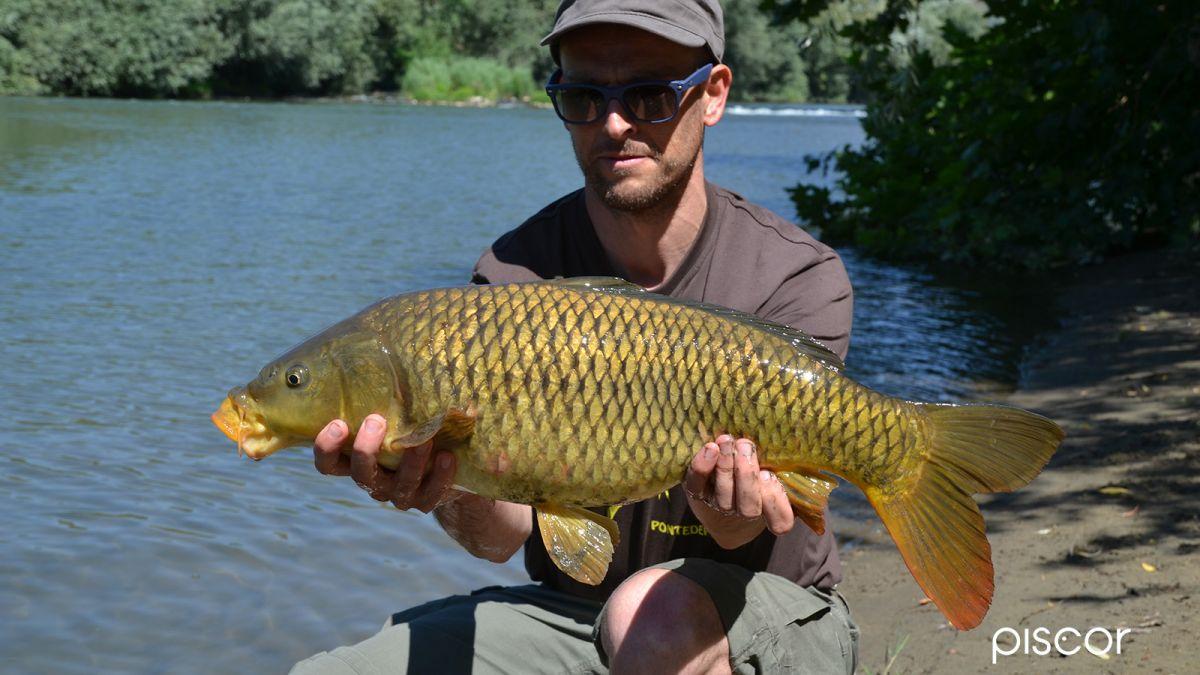 Pêche à la Carpe Polenta 4
