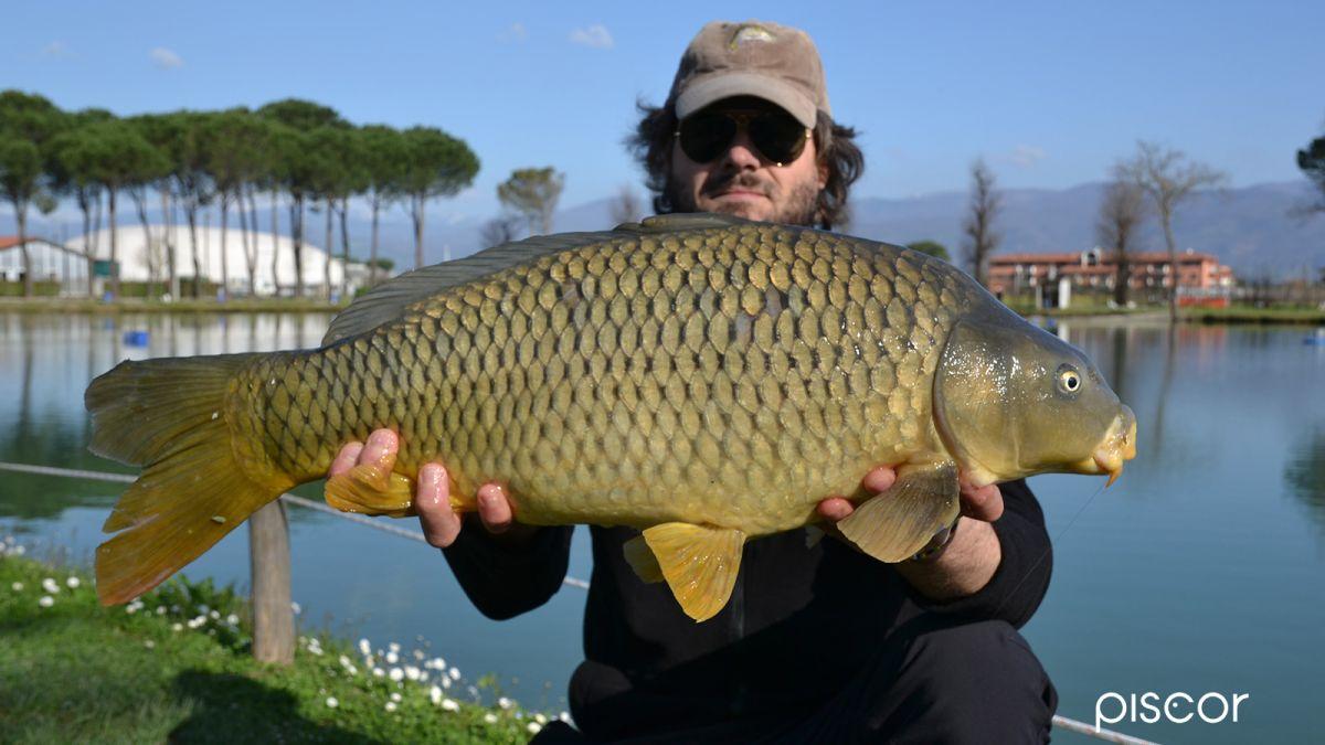 Pêche à la Carpe Polenta 5