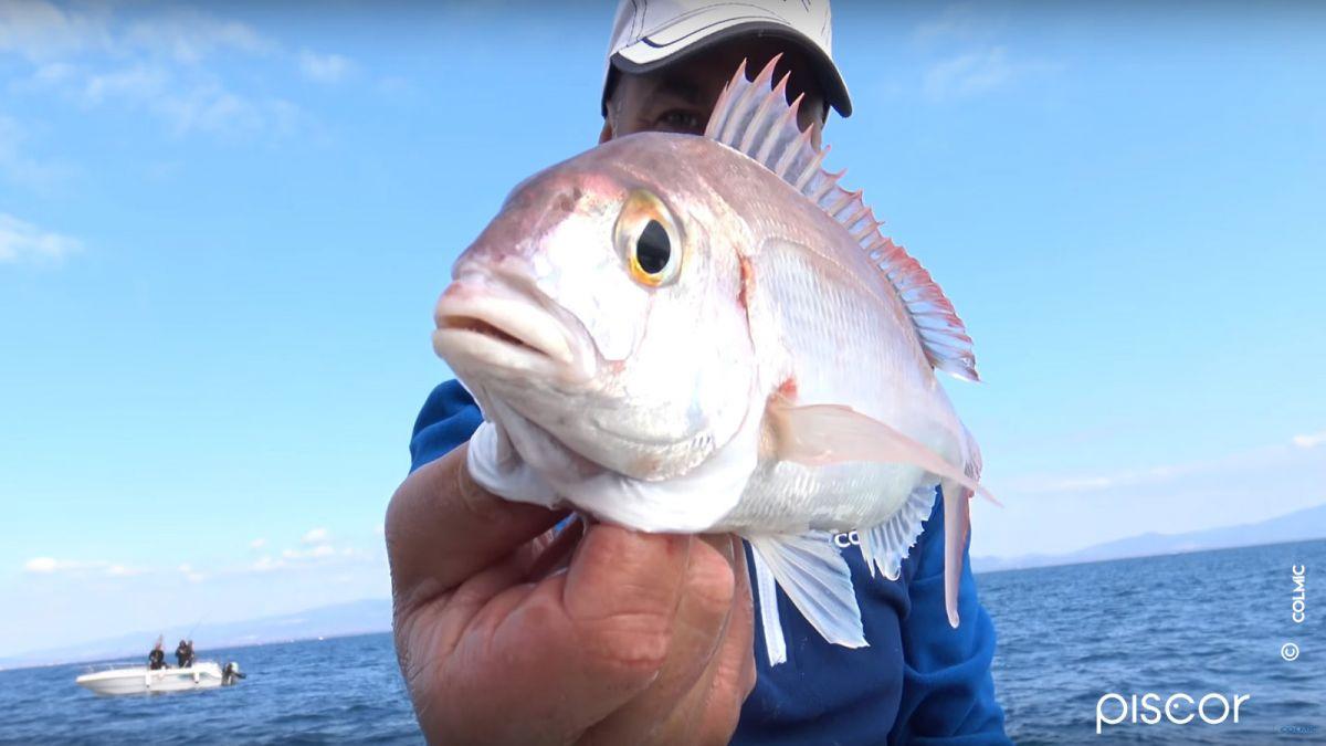Pêche à la Crevette en Bateau 5