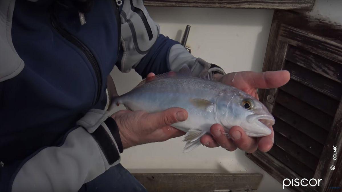 Pêche à la Crevette en Bateau 6