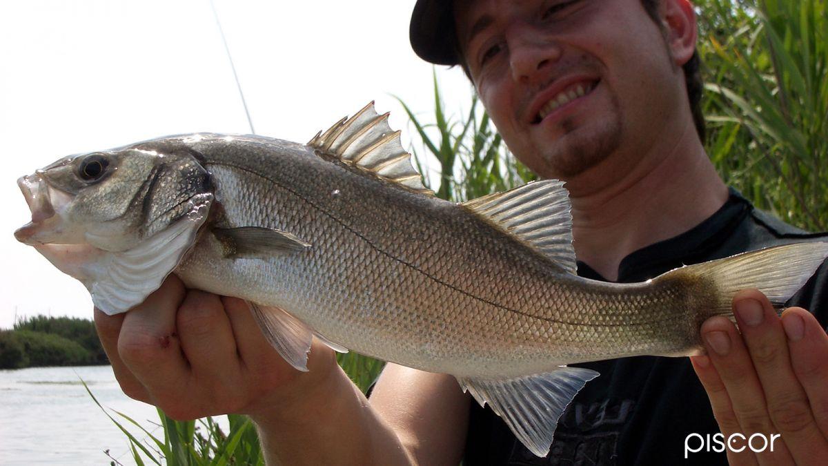 Pêche au Bar 5