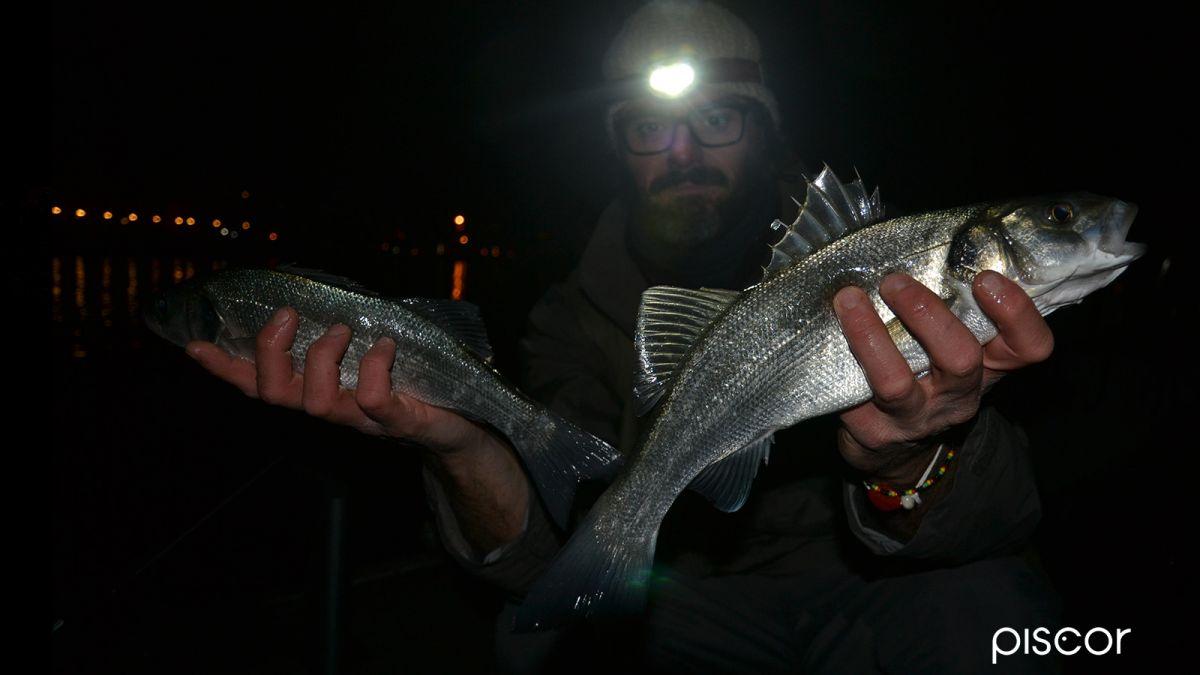 Pêche au Bar à la Crevette 7