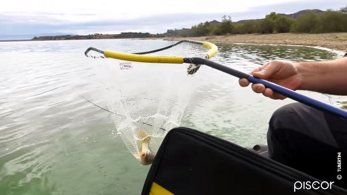 Pêche au Feeder 5
