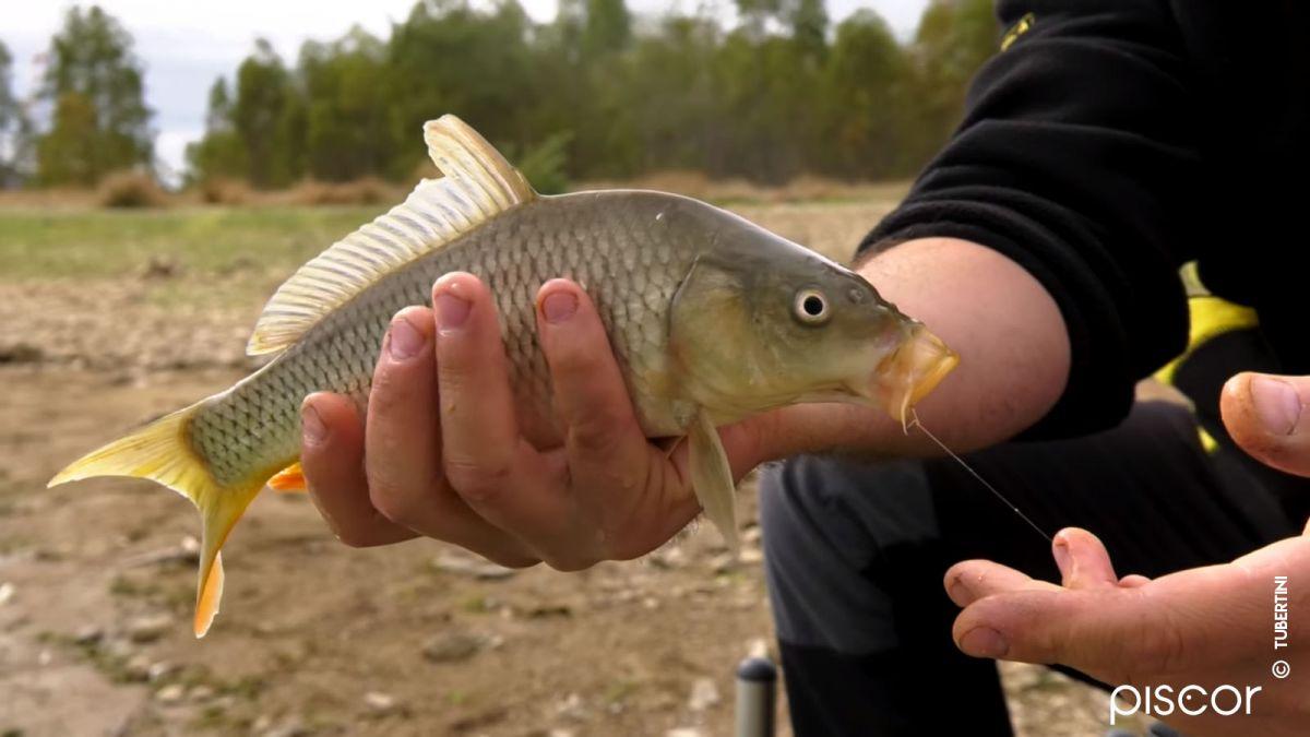 Pêche au Feeder 6