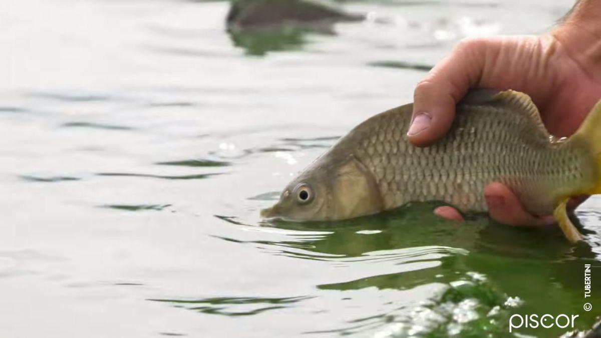 Pêche au Feeder 7