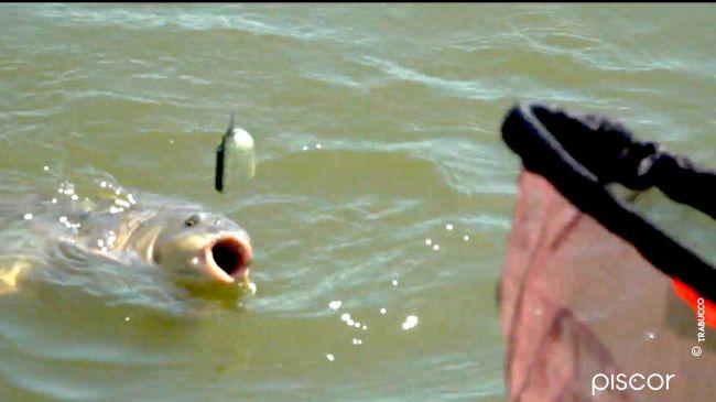 Pêche au Pellet Feeder dans les Réservoirs Privés 7
