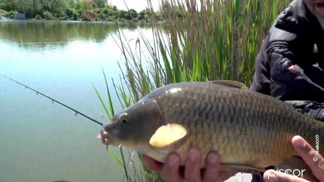 Pêche au Pellet Feeder dans les Réservoirs Privés 8