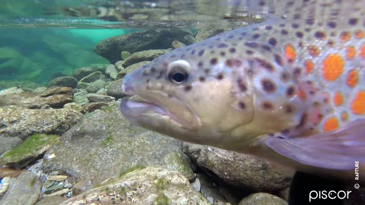 Pêche aux Leurres en Ruisseau 4