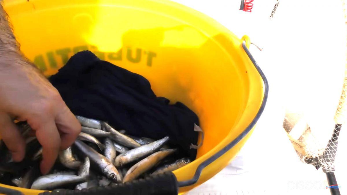 Pêche de la Dorade Grise à Soutenir 4