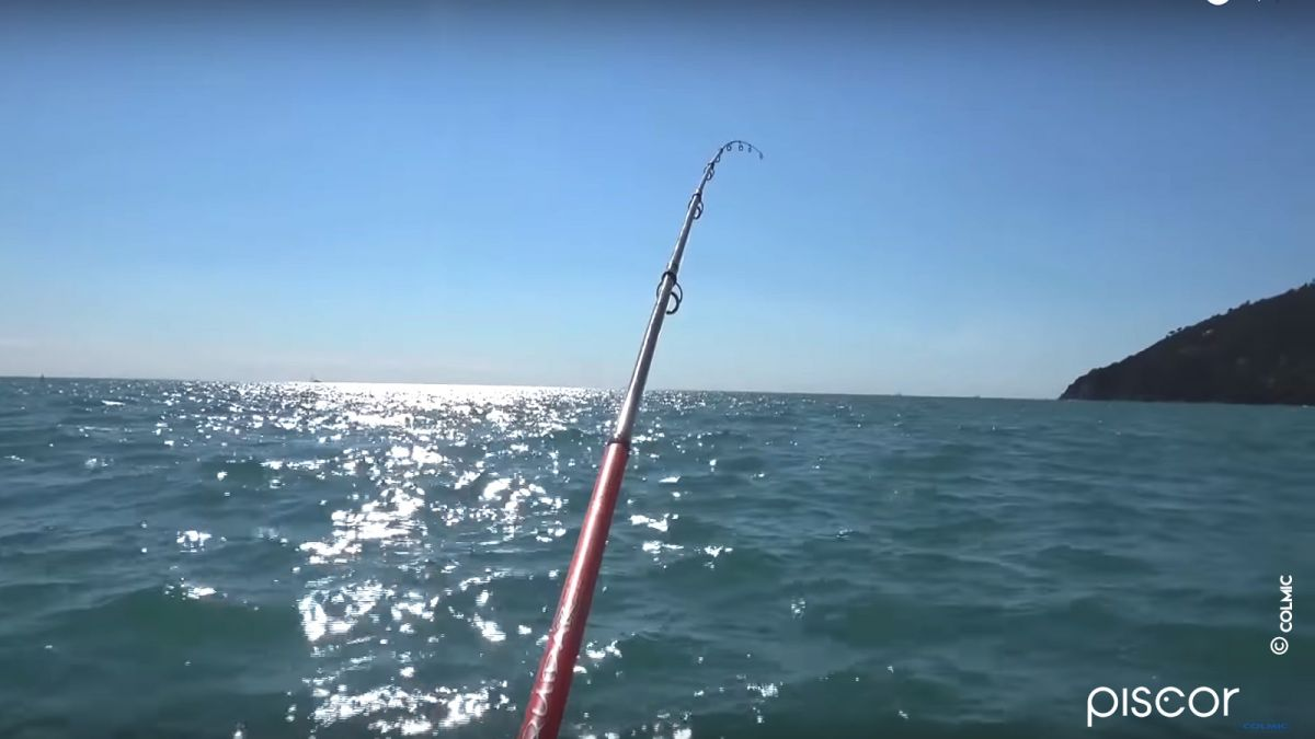 Pêche de la Seiche à la Turlutte en Bateau 2