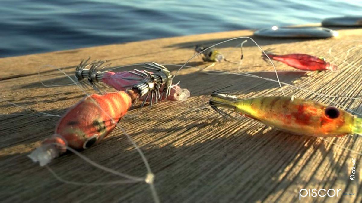 Pêche du Calamar en Bateau 10