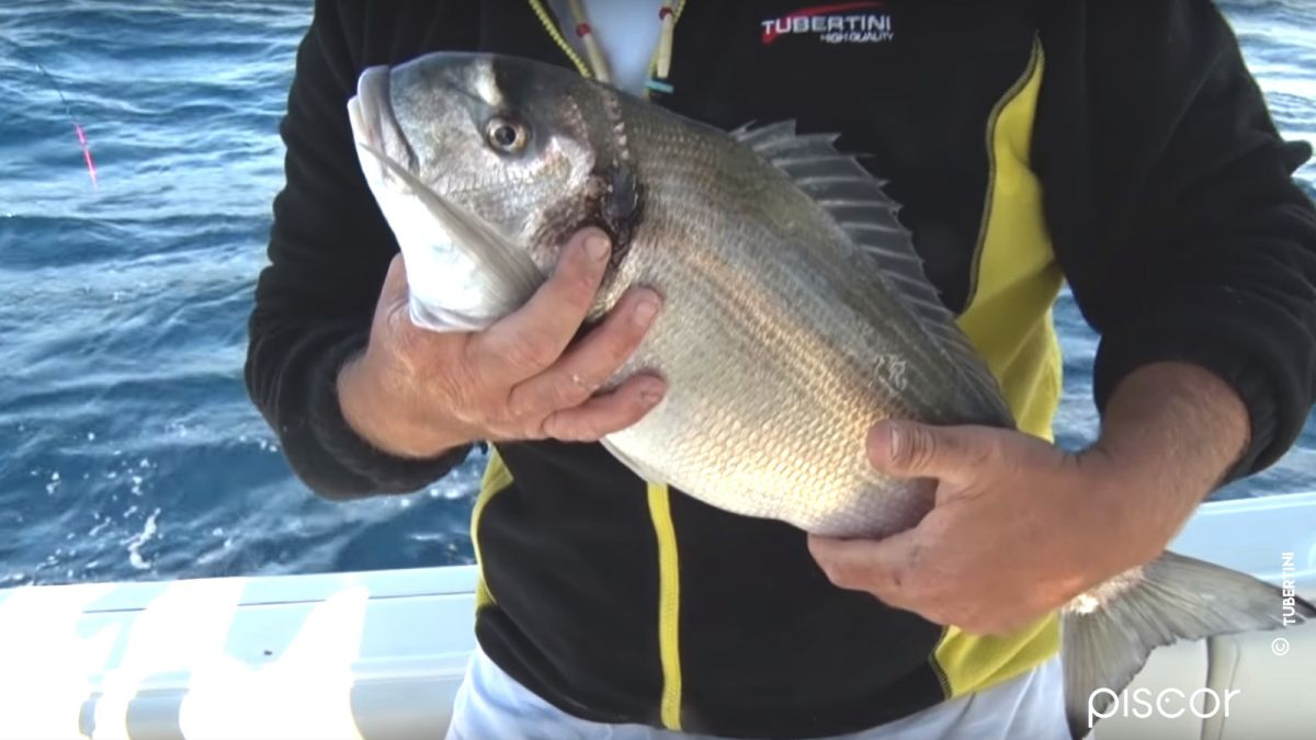 Pêche en Bateau 0