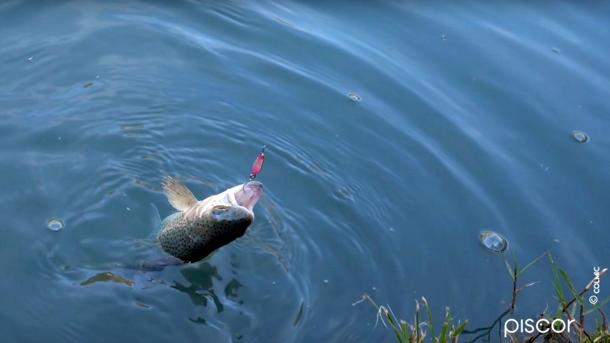 Pêche en Trout Area 2