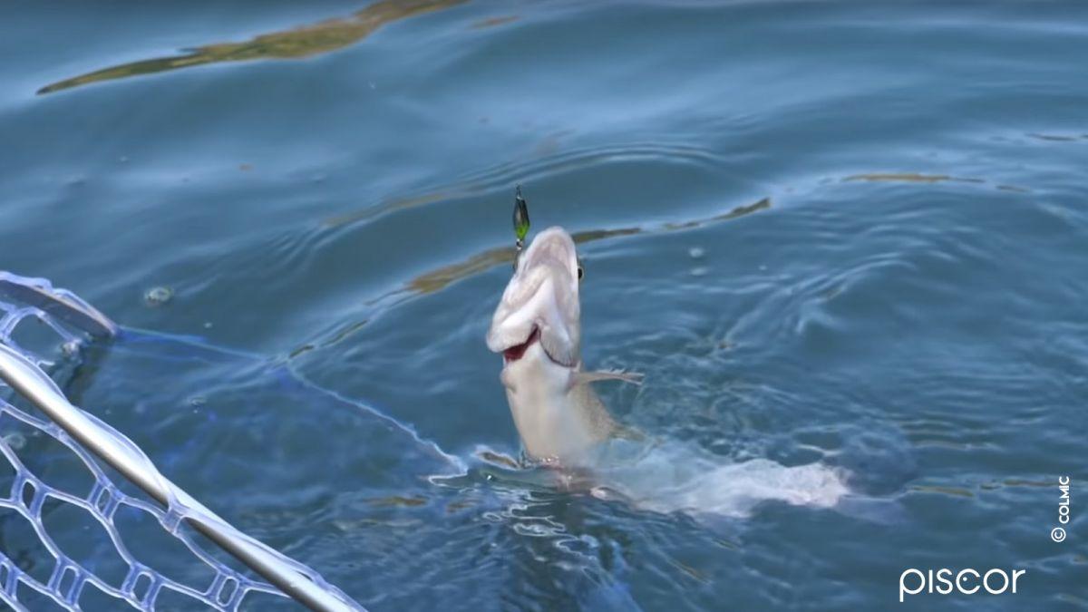 Pêche en Trout Area 3