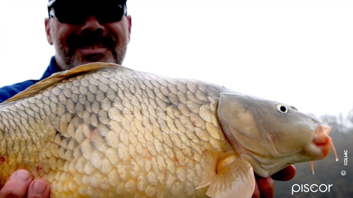 Pesca a Carpe e Breme con Bigattini 2