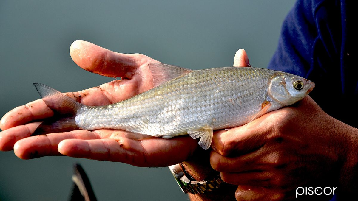 Pesca a Feeder 3