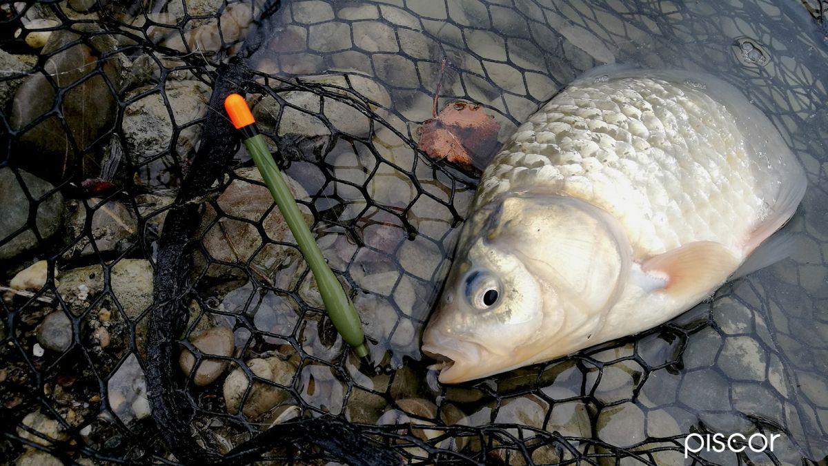 Pesca a Feeder 4