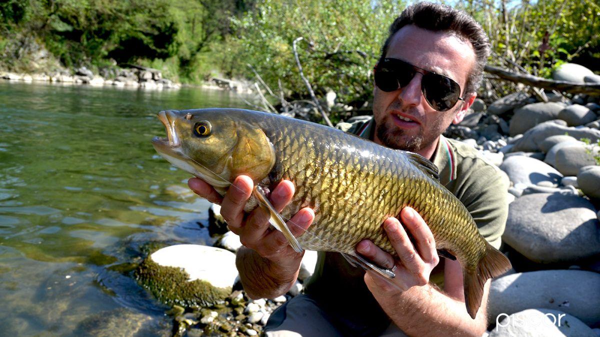 Pesca a Feeder 7