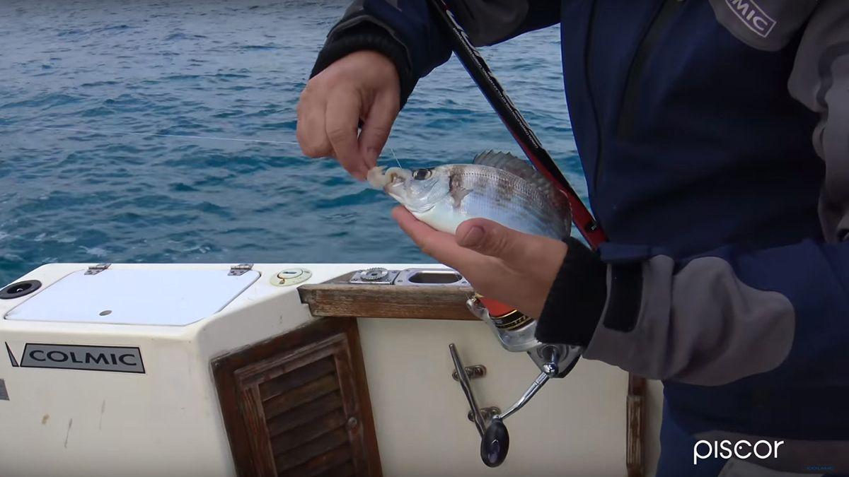 Pesca A Paraghi E Saraghi 7