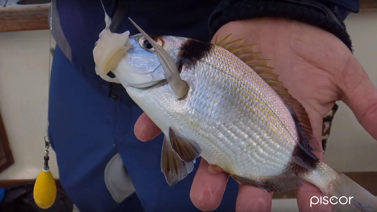 Pesca A Paraghi E Saraghi 9