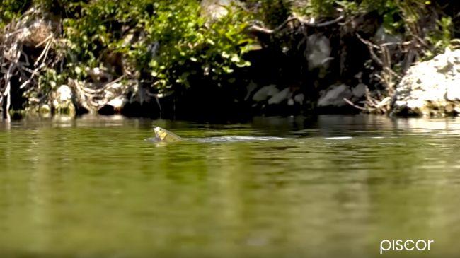 Pesca ai Cavedani con la Bolognese in Fiume 2