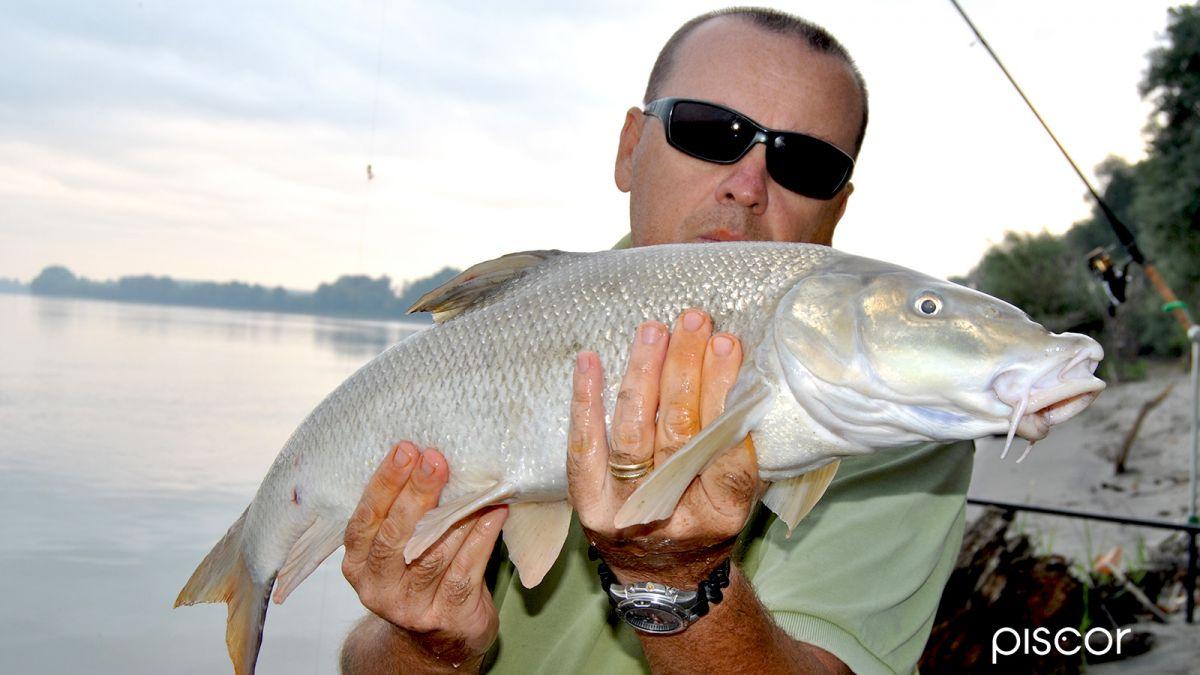 Pesca al Barbo 8