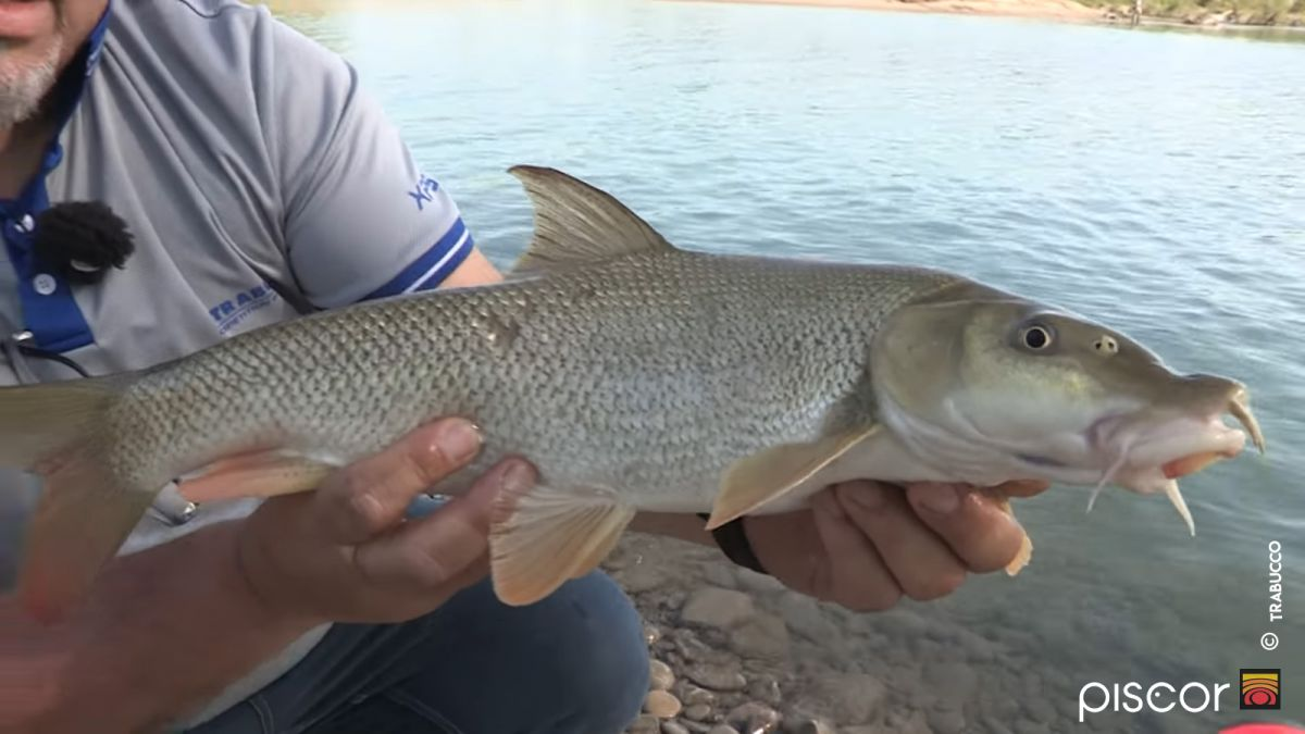 Pesca al Barbo a Feeder 2