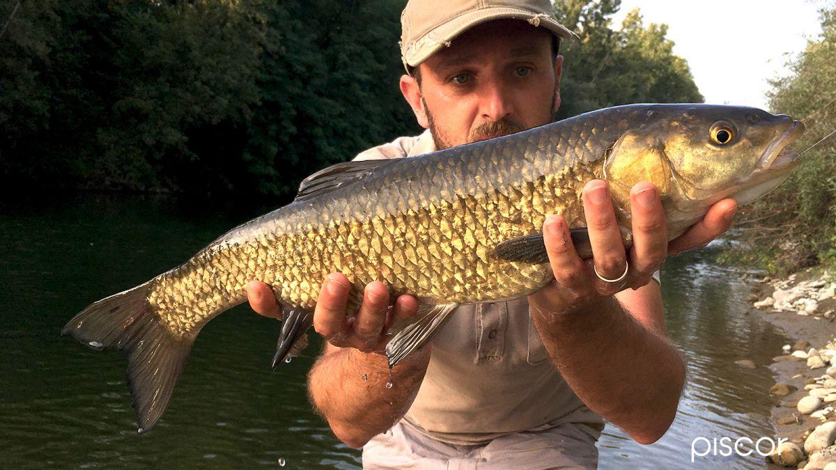 Pesca al Cavedano 7