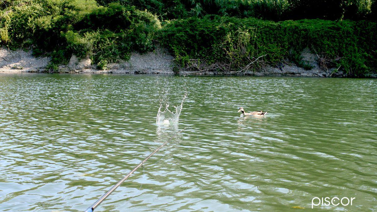 Pesca al Cefalo 1