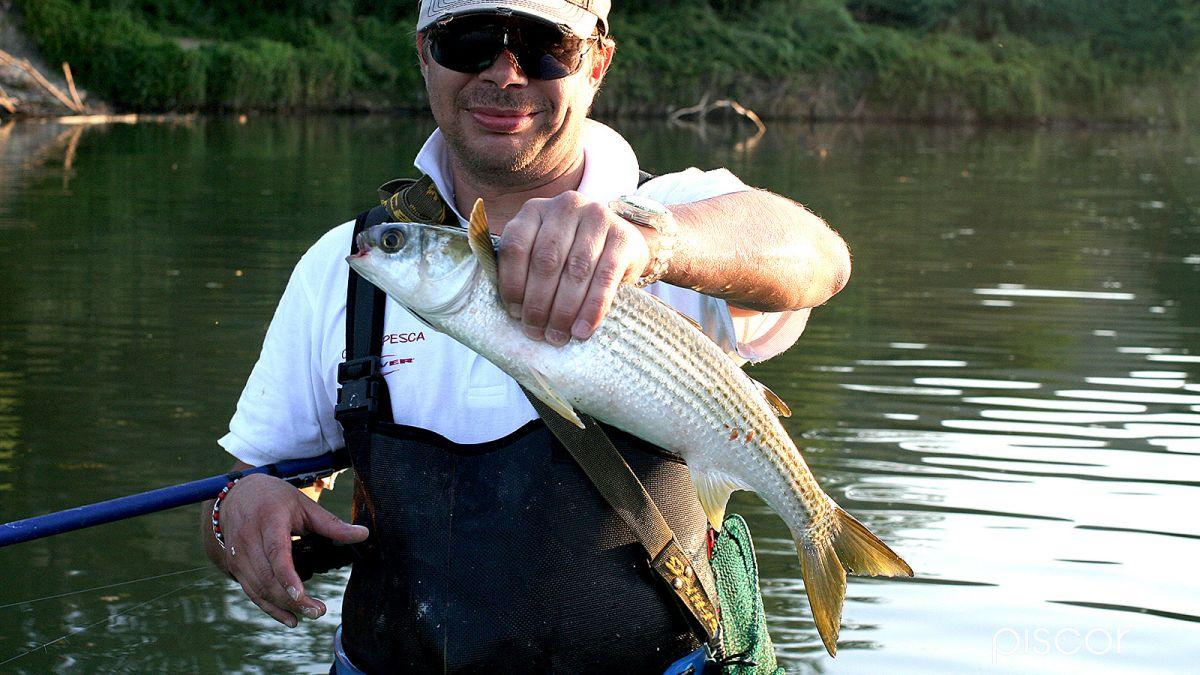 Pesca al Cefalo 5
