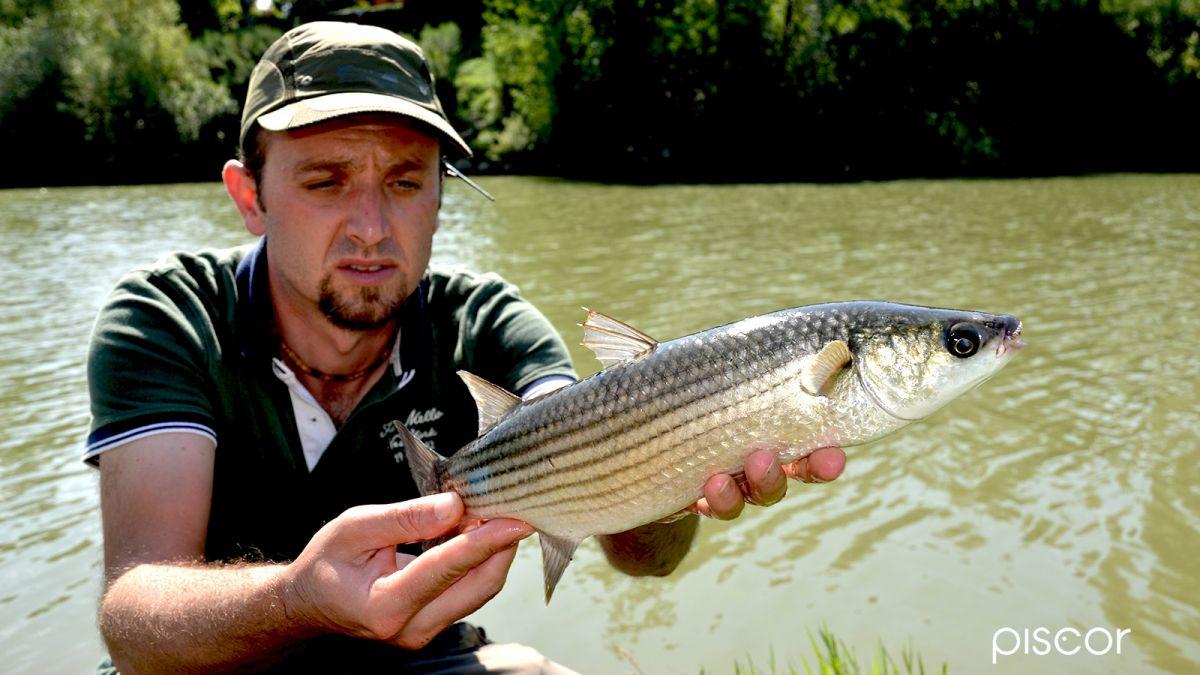 Pesca al Cefalo 8