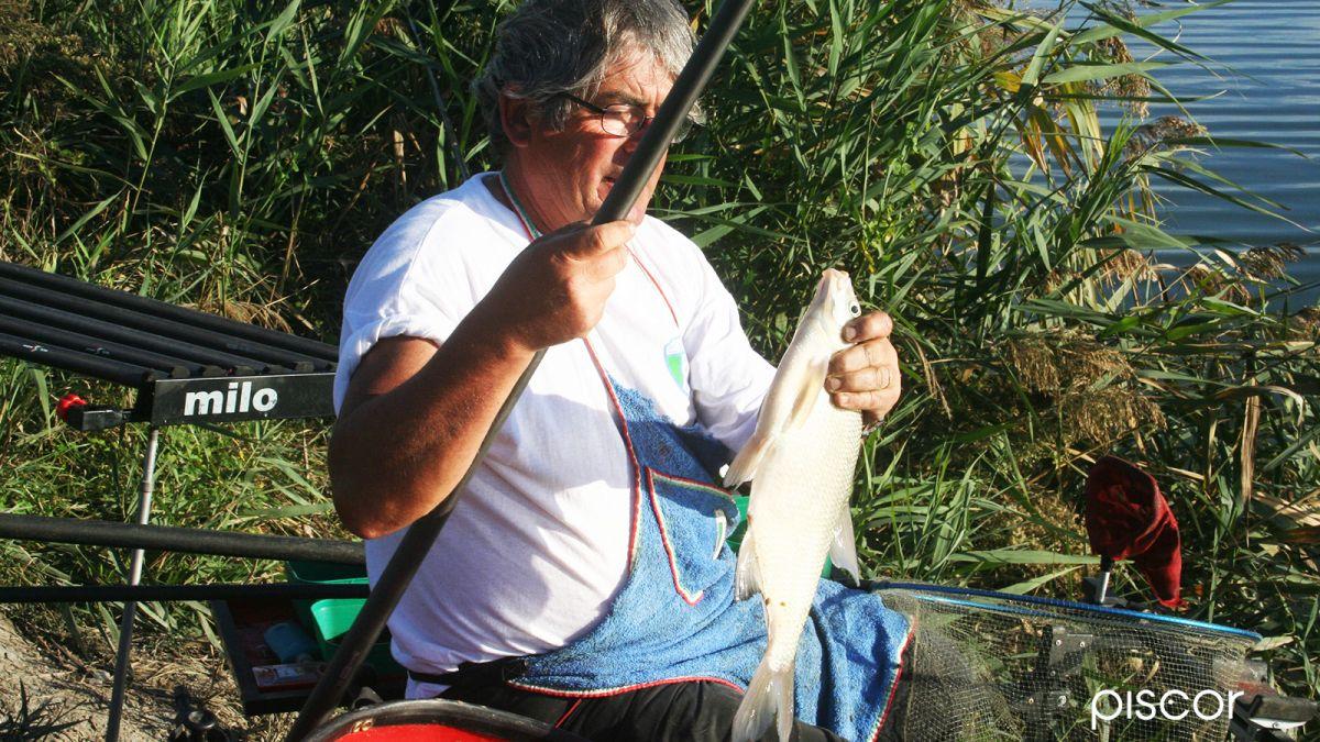 pesca al colpo 0