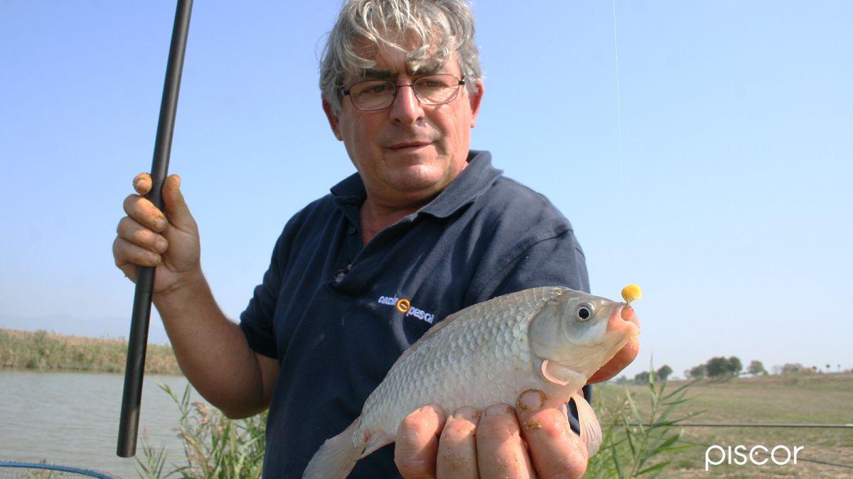 pesca al colpo 6