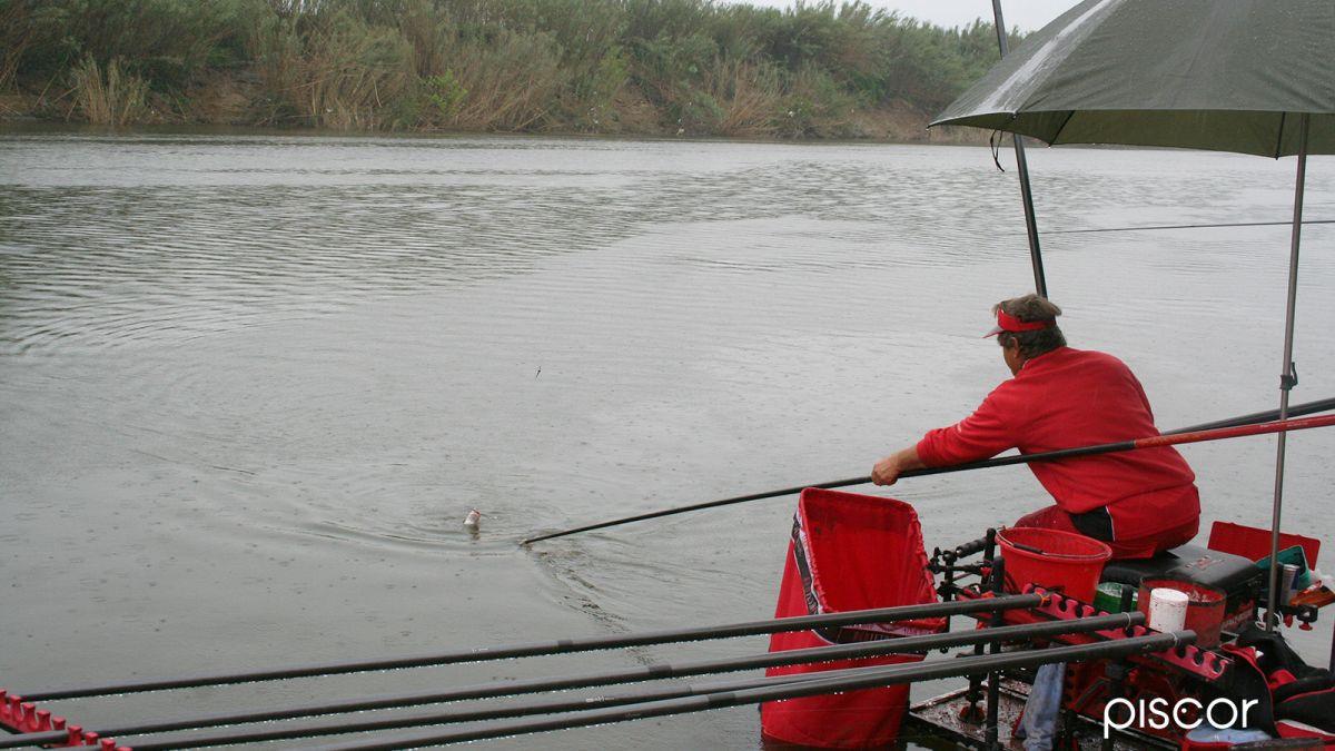 pesca al colpo 7