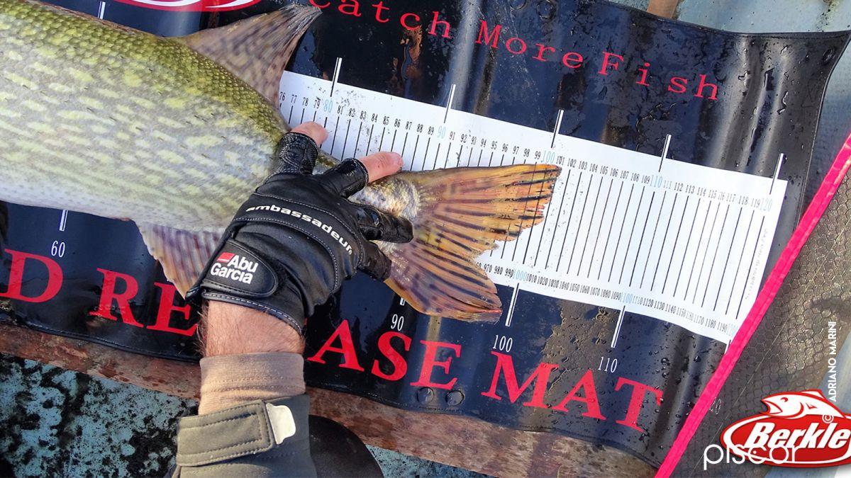 Pesca al Luccio 9