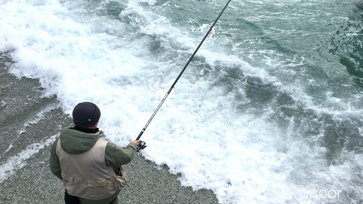 Pesca al Sarago con Bolognese 2