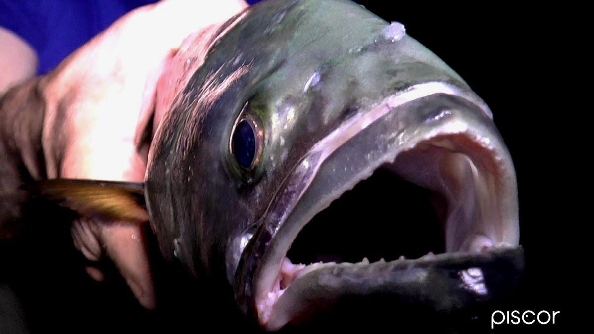 Pesca al Serra 4