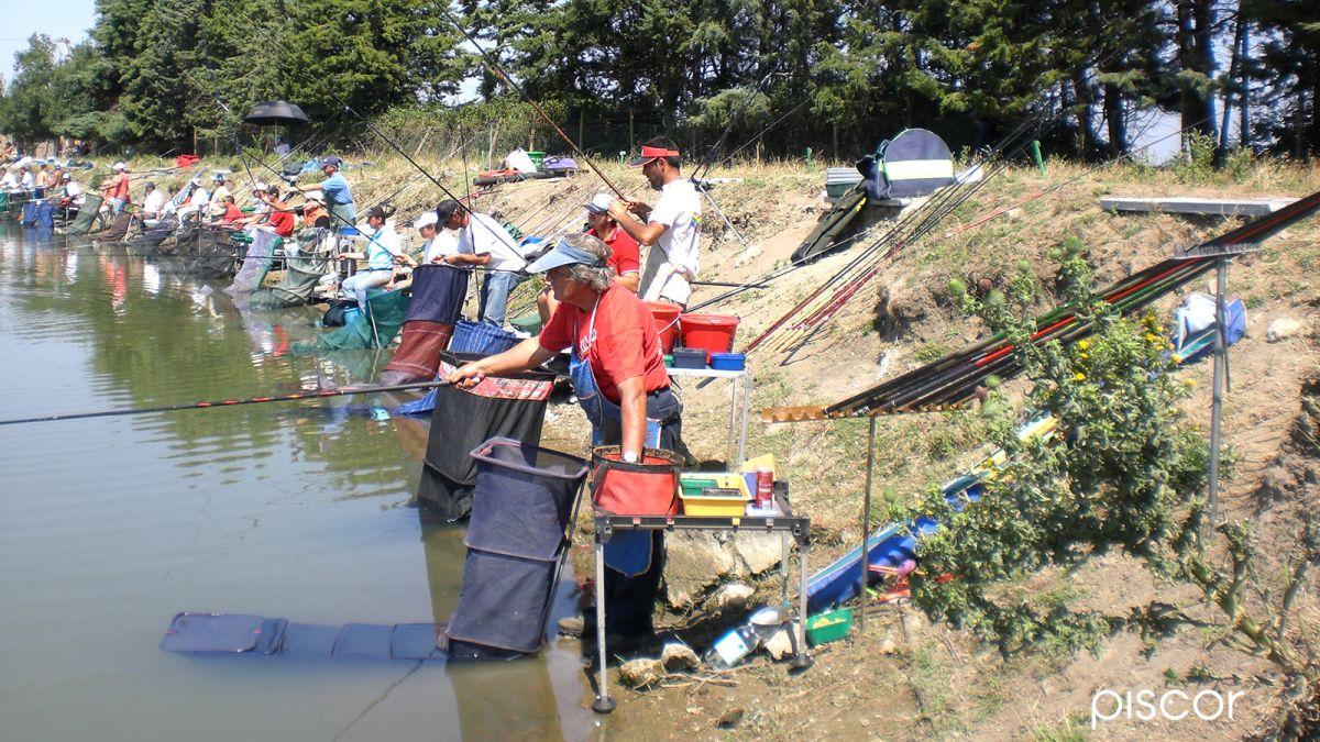 Pesca Alborella 2