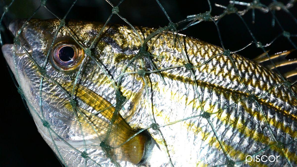 Pesca alla Bolognese 7