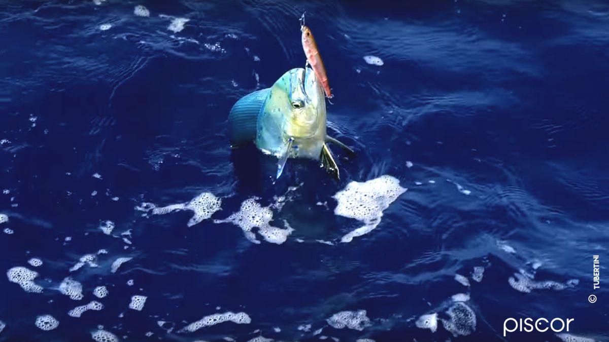 Pesca alla Lampuga 6