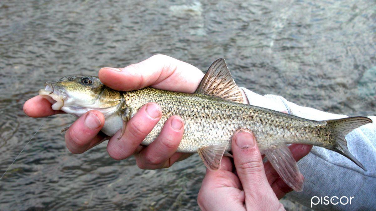Pesca alla Passata 4